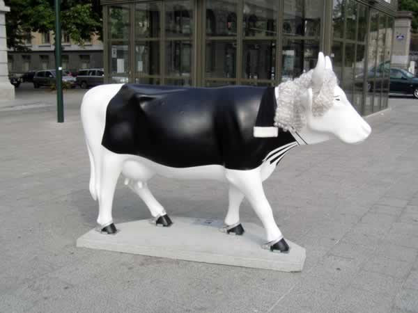 The judge cow