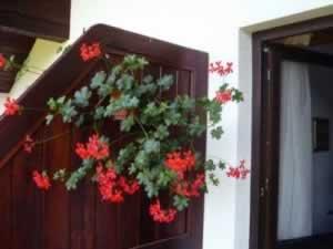Flowers on the deck at Popasul Cavalerului