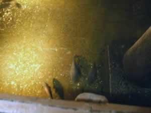 Fish in Basilica Cistern
