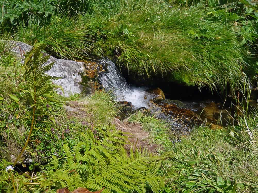 Clear water spring in Retezat