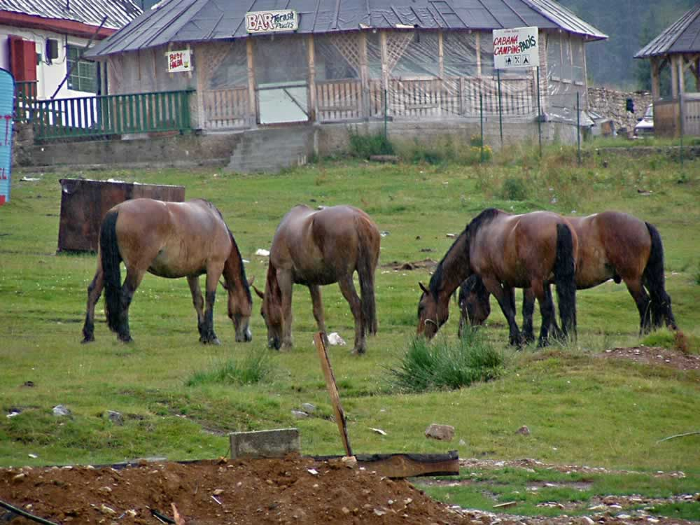Horses in front of Padis Restaurant