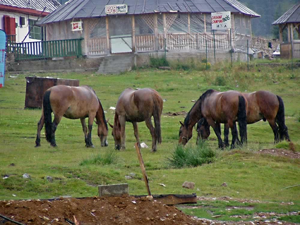 Horses in front of Padis Restaurant
