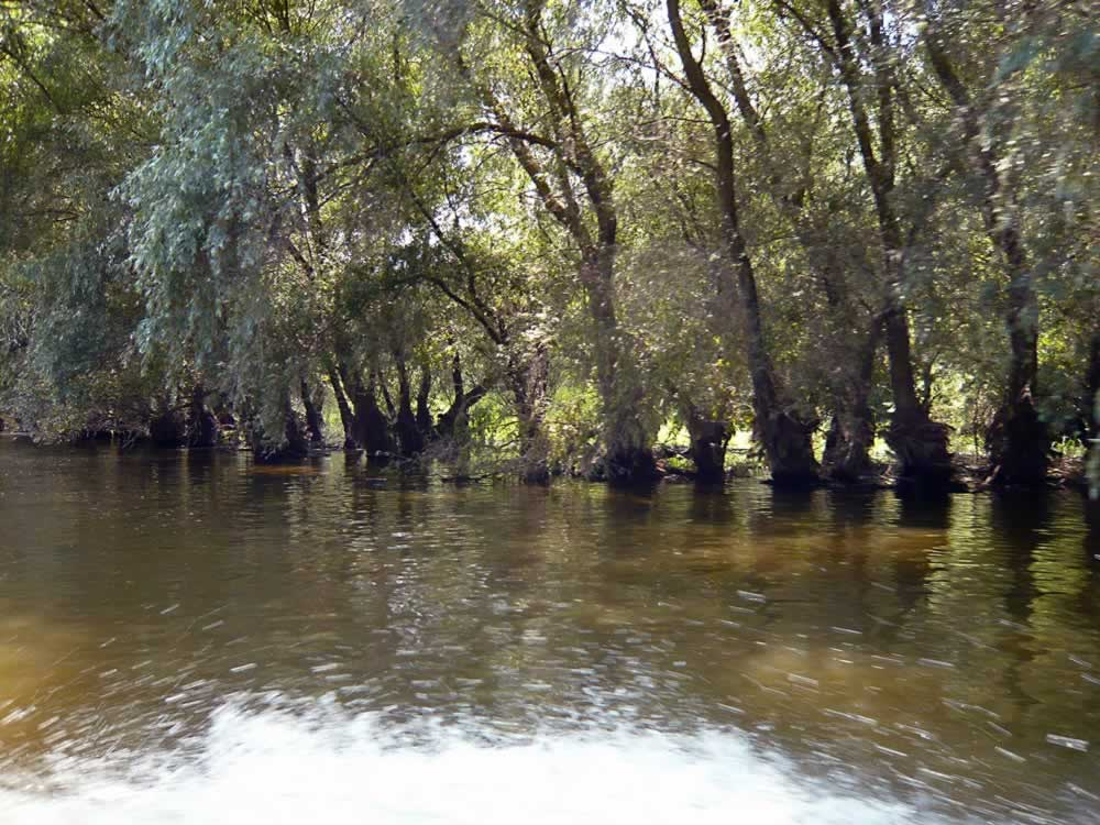 Danube Delta Water Willows Amp Fish Soup