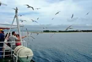 Seagulls following the ferry to Thassos