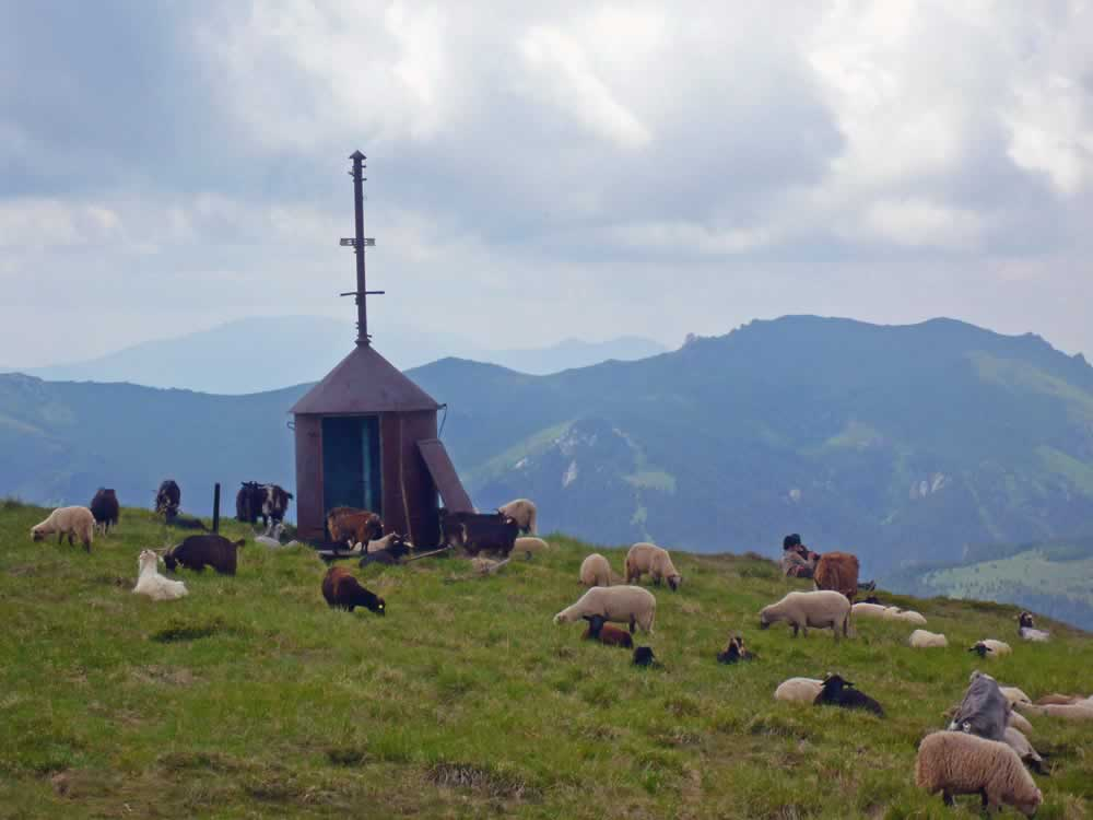 Sheep on mountains