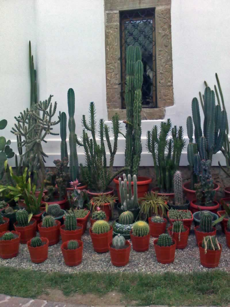 Cactii Collection at a Monastery