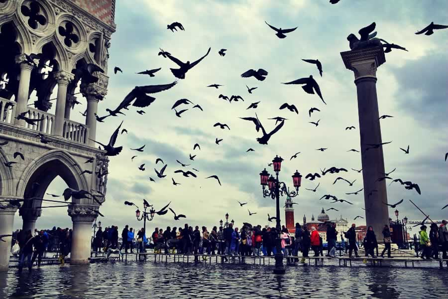 Birds attack in Venice - one of the best trips from Milan