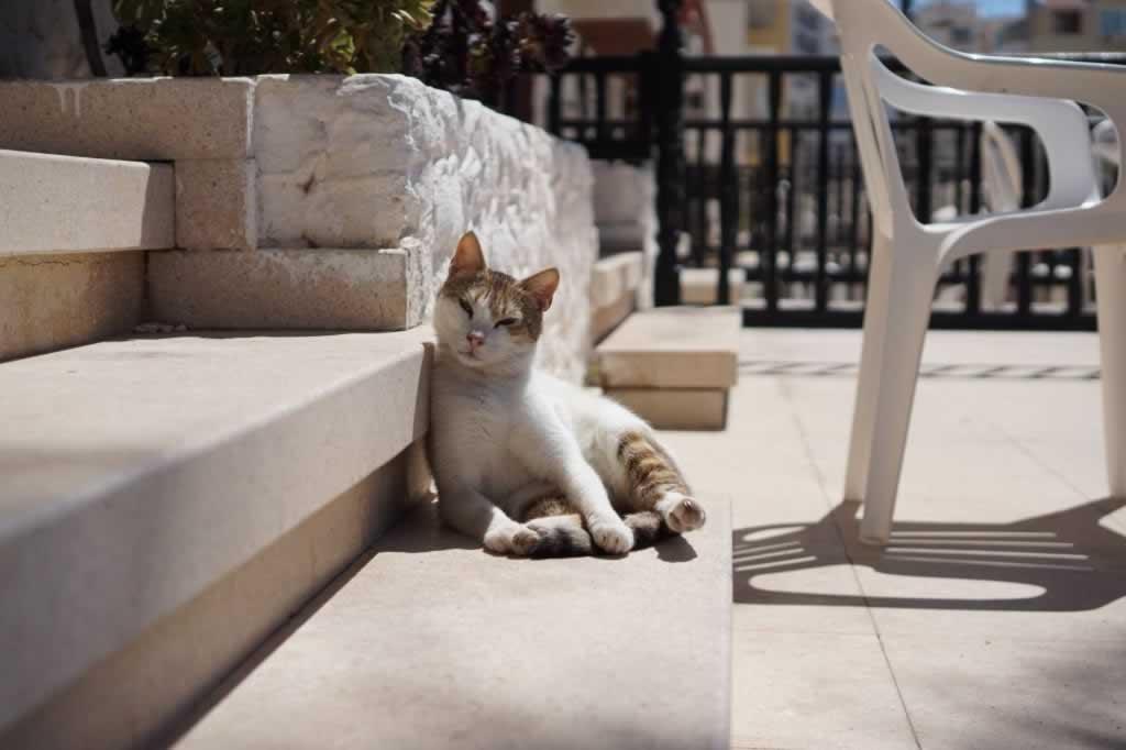 Cat taking a sunbath
