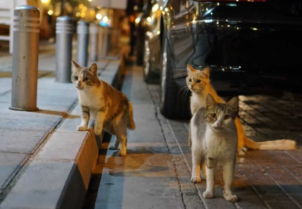three cats on Larnaca street