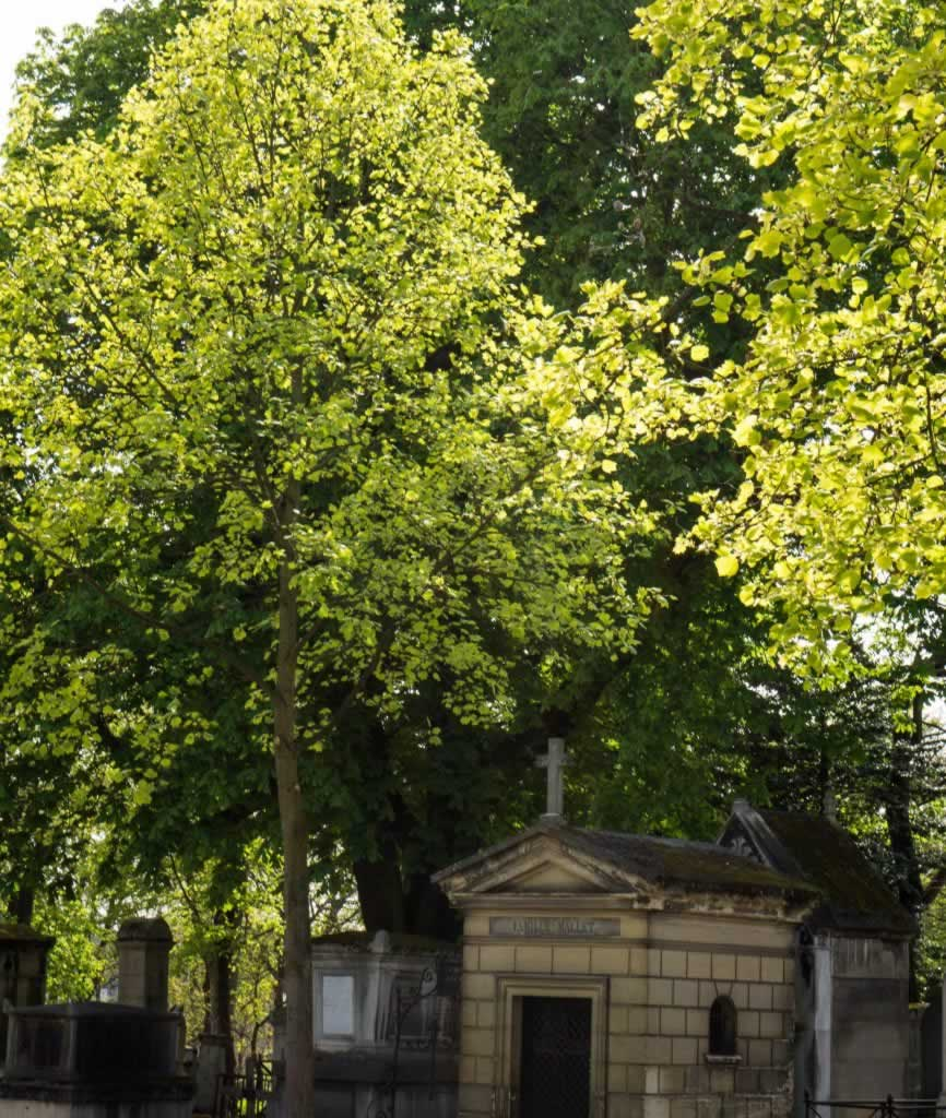 green tree pere lachaise