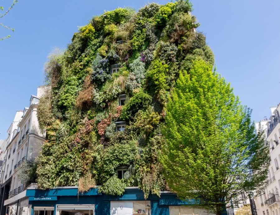 Vertical garden on building wall in Paris