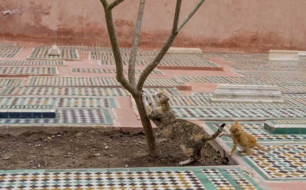 cats saadian tombs