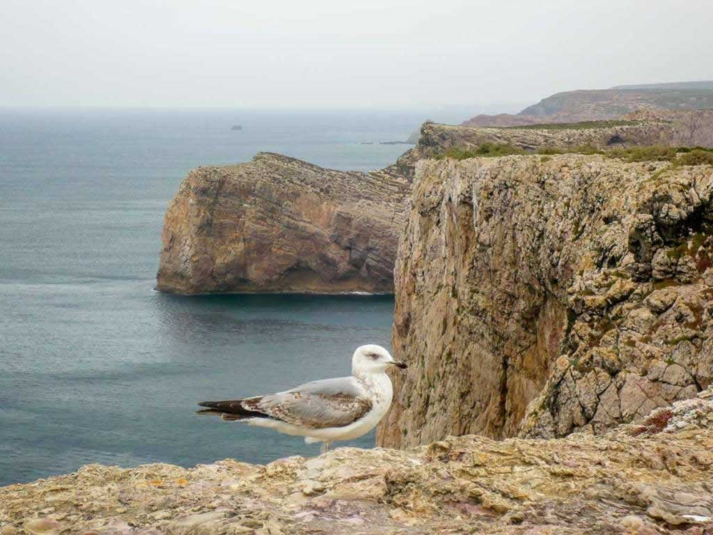 cliffs seagull in Portugal
