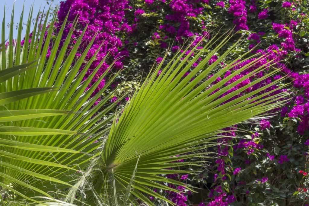 majorelle green magenta plants