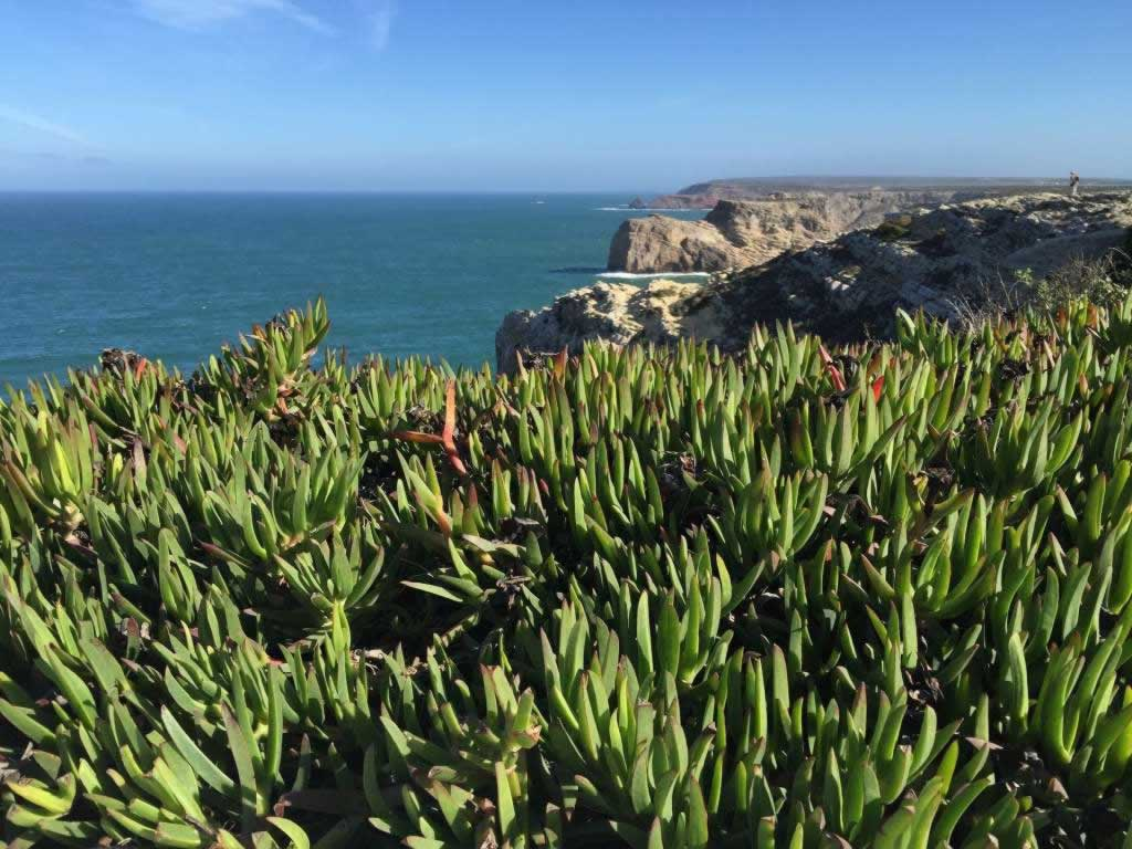 portugal vegetation on cliffs