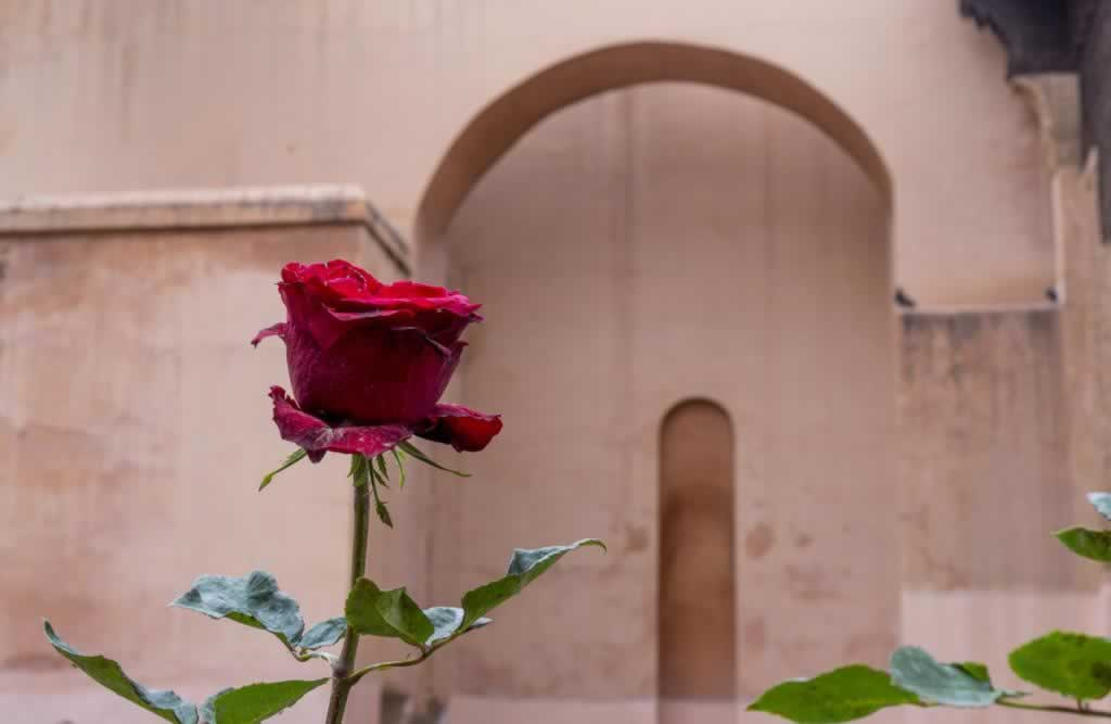red rose saadian tombs