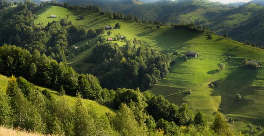 Hillside in summer, with shades of green
